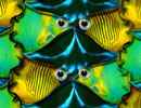 fish tessellation pattern by OzPlasmic